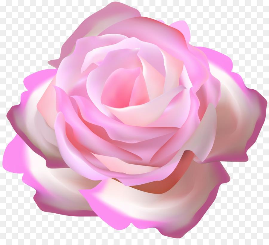 Descarga gratuita de Las Rosas De Jardín, Rosa, Col Rosa Imágen de Png