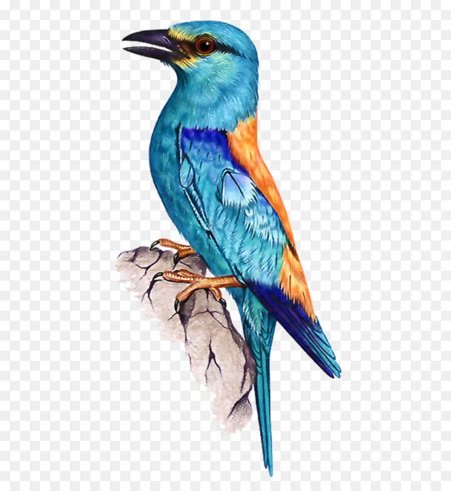 Descarga gratuita de Aves, Imagen Digital, Descargar Imágen de Png