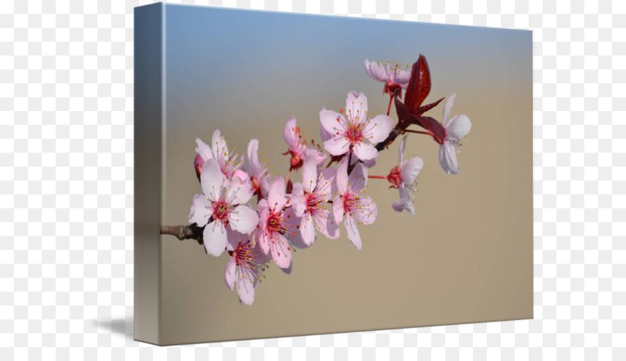 Descarga gratuita de Flor, Diseño Floral, De Los Cerezos En Flor Imágen de Png