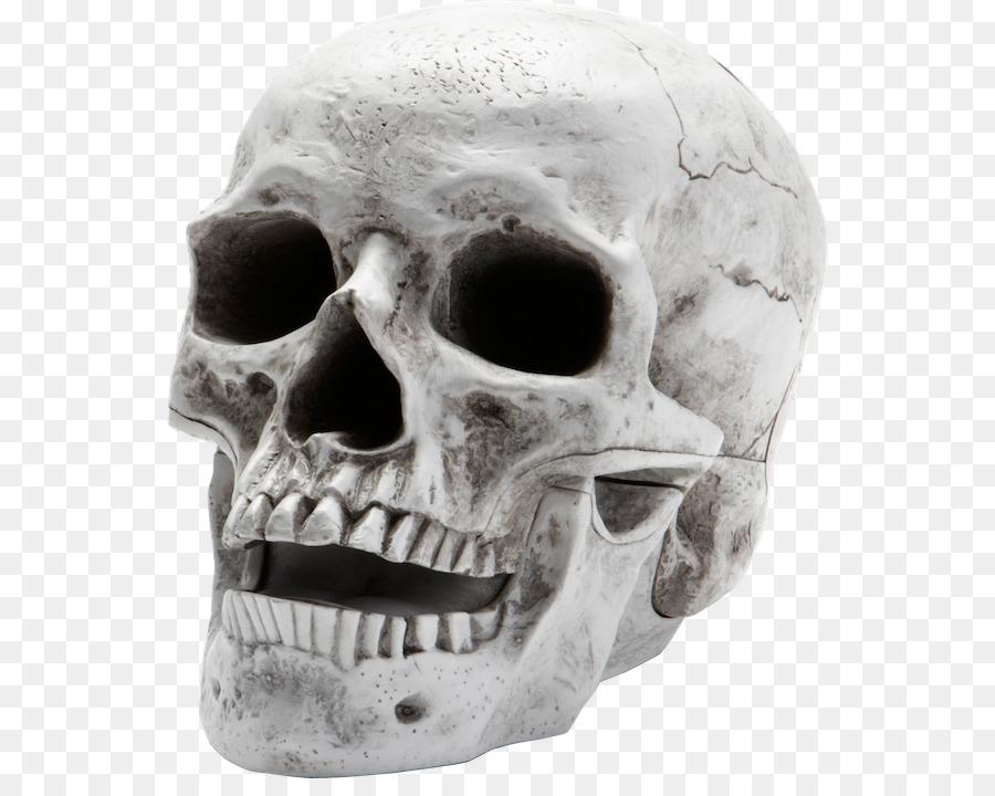 Descarga gratuita de Esqueleto Humano, Esqueleto, Homo Sapiens Imágen de Png