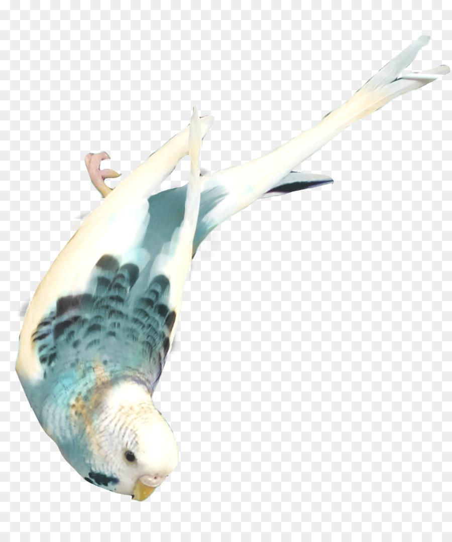 Descarga gratuita de Aves, Imagen Digital, Parakeet Imágen de Png