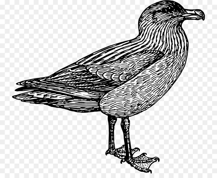 Descarga gratuita de Aves, Europea De La Gaviota, Skuas Imágen de Png
