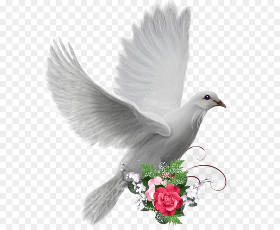 Descarga gratuita de Paloma Nacional, Columbidae, Aves Imágen de Png