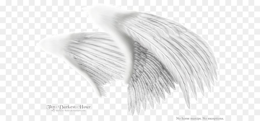 Descarga gratuita de En Blanco Y Negro, Ala, Ala De ángel Imágen de Png