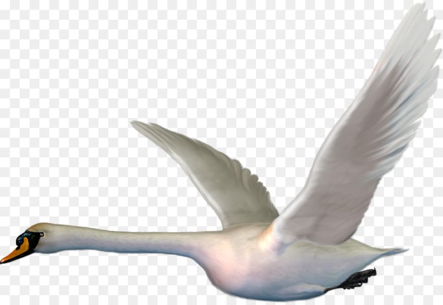 Descarga gratuita de Ganso, Aves, Cisne Imágen de Png