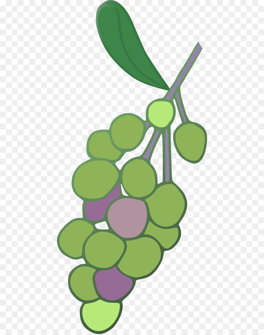 Descarga gratuita de Uva, Común De La Uva De La Vid, Uva Concord Imágen de Png