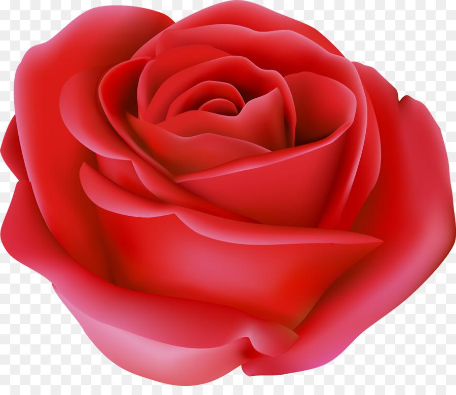 Descarga gratuita de Las Rosas De Jardín, Floribunda, Las Flores Cortadas Imágen de Png