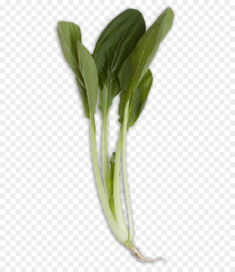 Descarga gratuita de La Acelga, Komatsuna, De Verduras De Primavera Imágen de Png