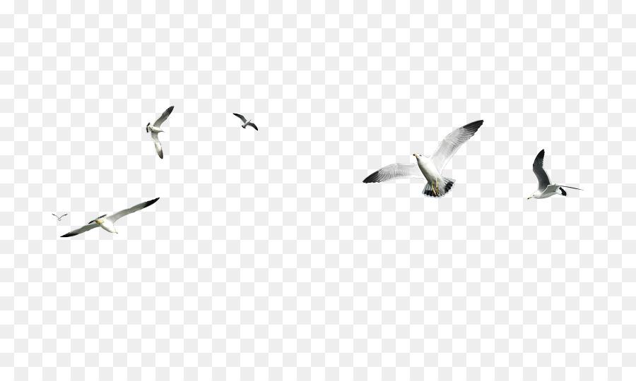 Descarga gratuita de Las Gaviotas, Aves, Photoscape Imágen de Png