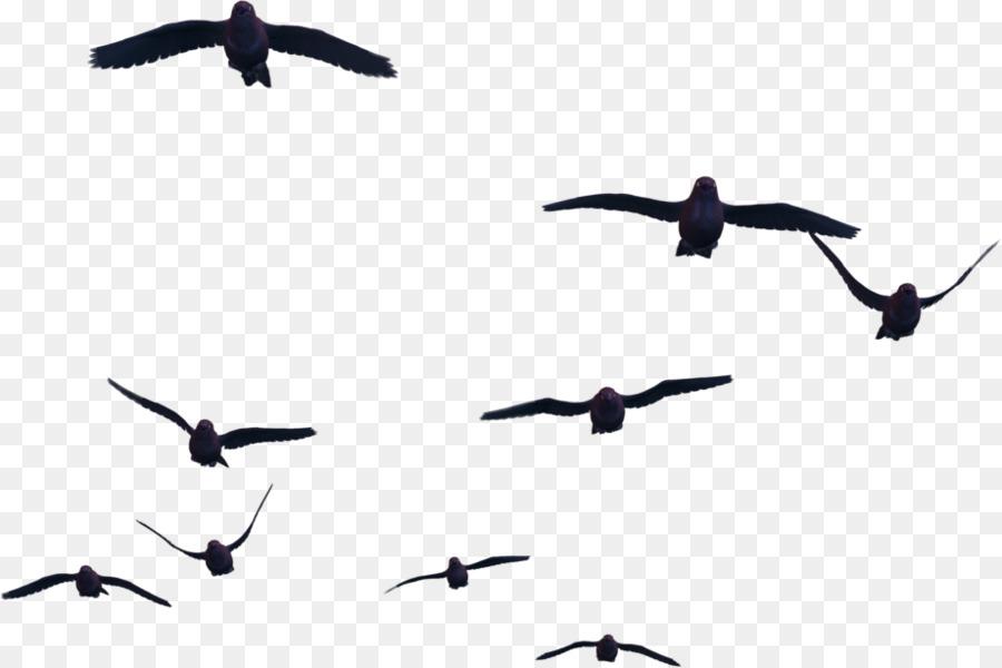 Descarga gratuita de Aves, Vuelo, Las Aves En Vuelo imágenes PNG
