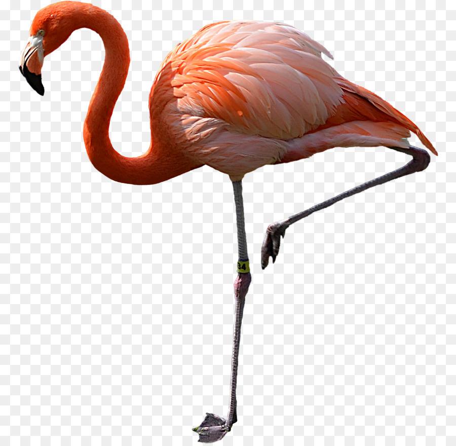 Descarga gratuita de Flamingo, Aves, Iconos De Equipo Imágen de Png