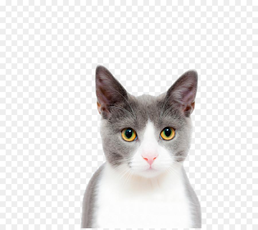 Descarga gratuita de Gato, Perro, Gatito Imágen de Png