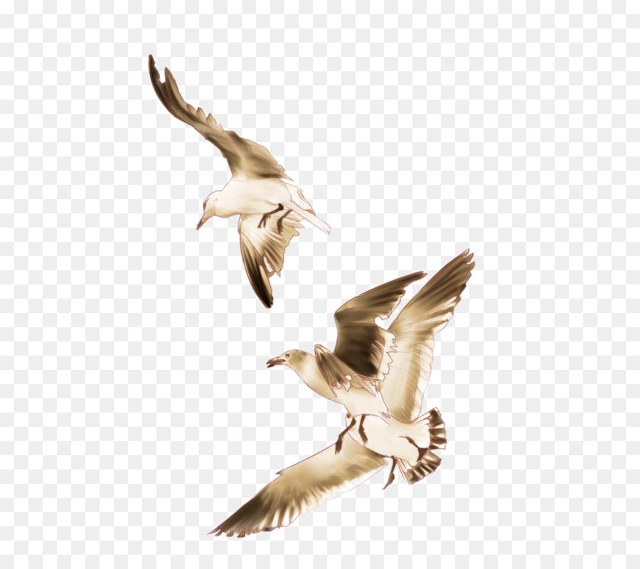 Descarga gratuita de Europea De La Gaviota, Aves, Las Gaviotas Imágen de Png