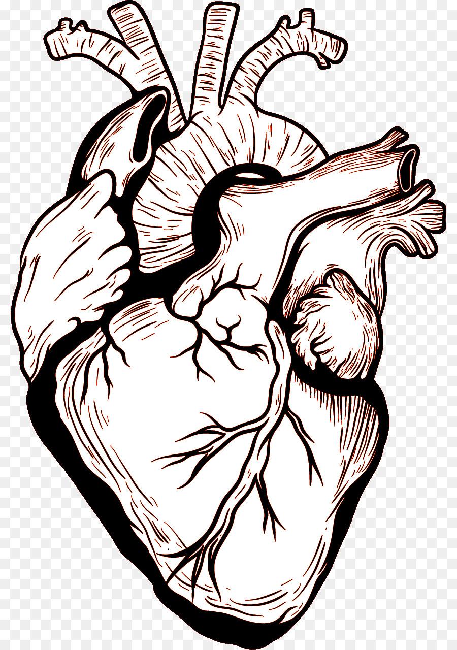 Corazón Cuerpo Humano Dibujo Imagen Png Imagen Transparente