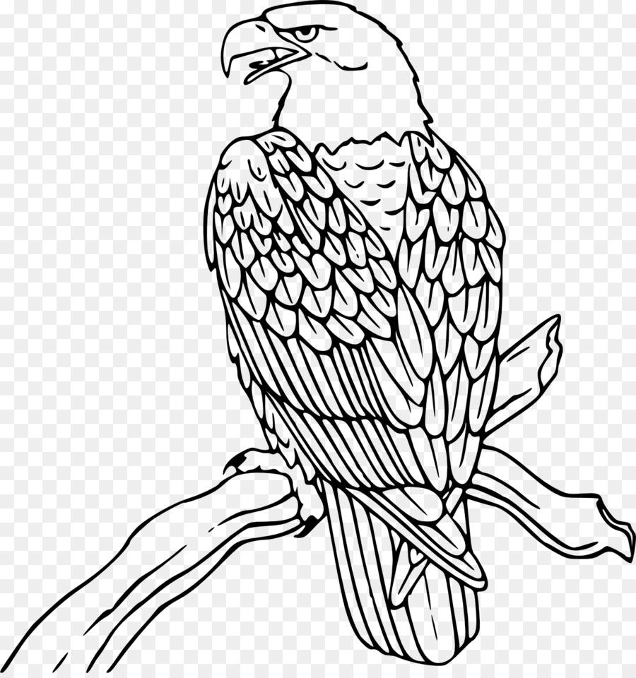 águila Calva Libro Para Colorear águila Imagen Png