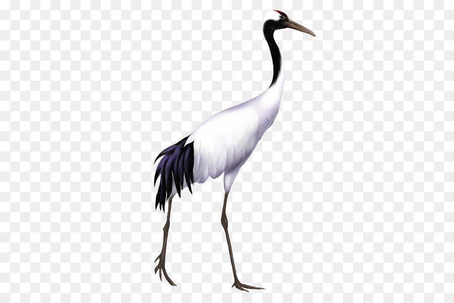 Descarga gratuita de Aves, Redcrowned De La Grúa, Gris Grulla Imágen de Png