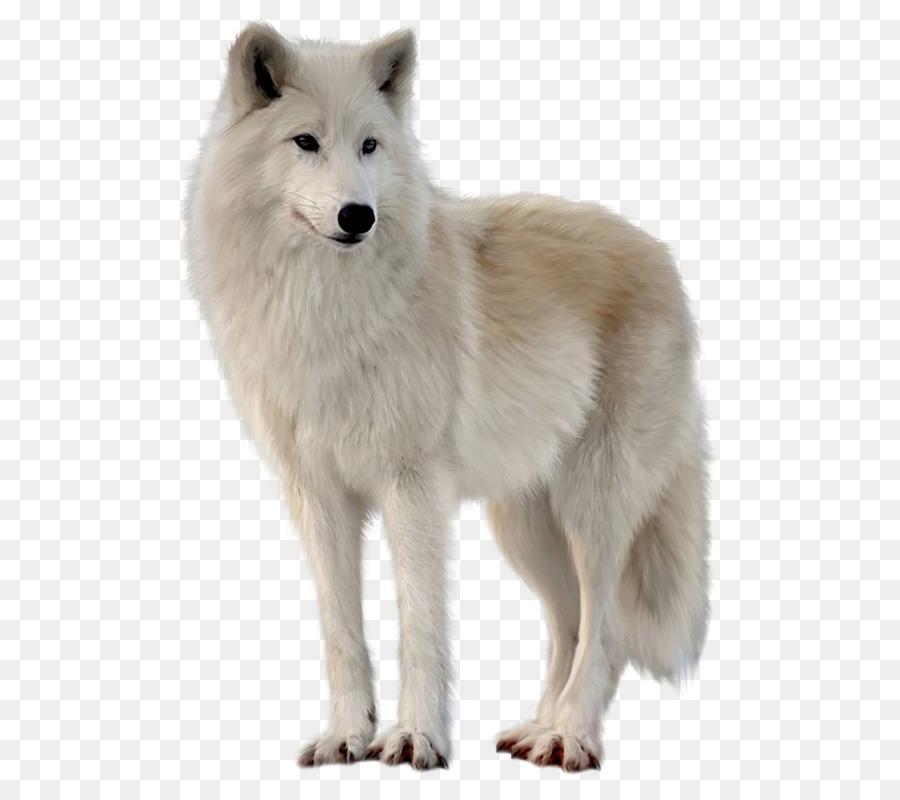 Descarga gratuita de Zorro ártico, Perro De Groenlandia, Fox Imágen de Png