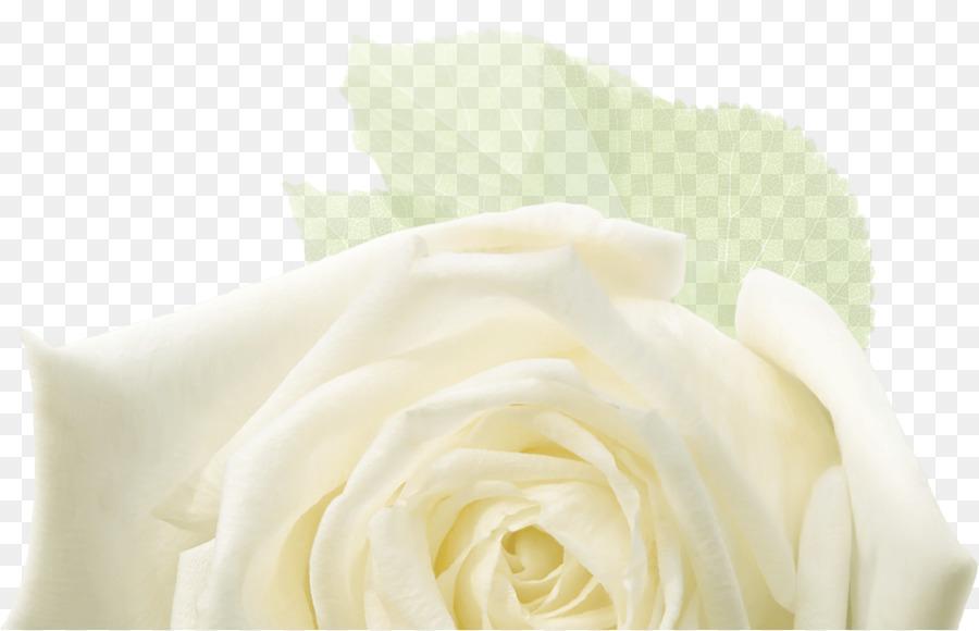 Descarga gratuita de Las Rosas De Jardín, Diseño Floral, Las Flores Cortadas imágenes PNG