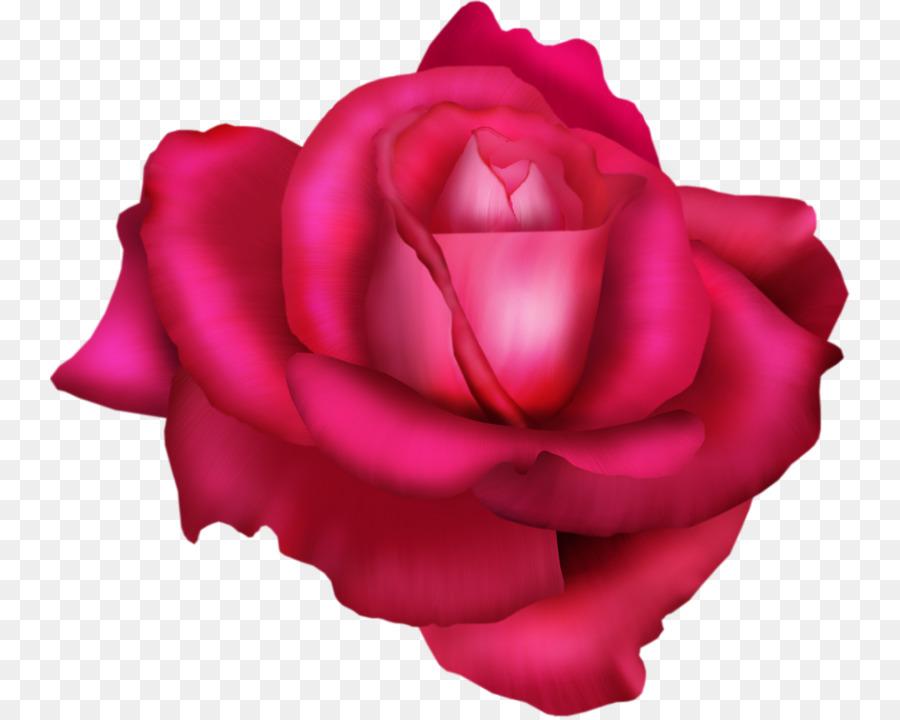 Descarga gratuita de Las Rosas De Jardín, Col Rosa, China Rose Imágen de Png