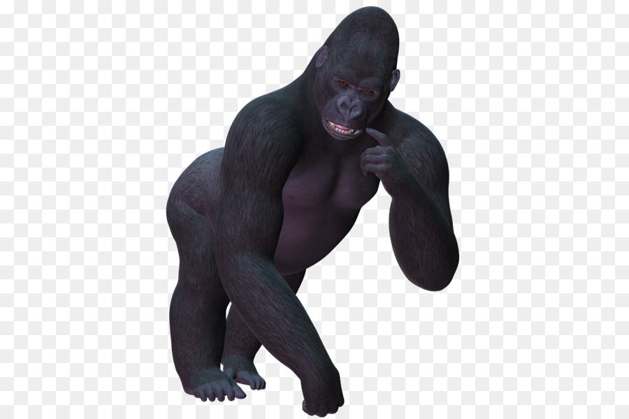 Descarga gratuita de Occidental Gorila, Chimpancé Común, Mono Imágen de Png