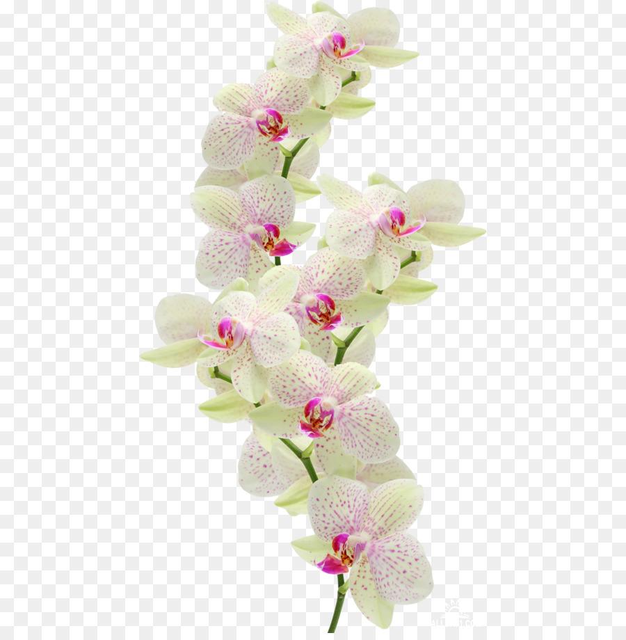 Descarga gratuita de La Polilla De Las Orquídeas, Las Orquídeas, Las Flores Cortadas imágenes PNG