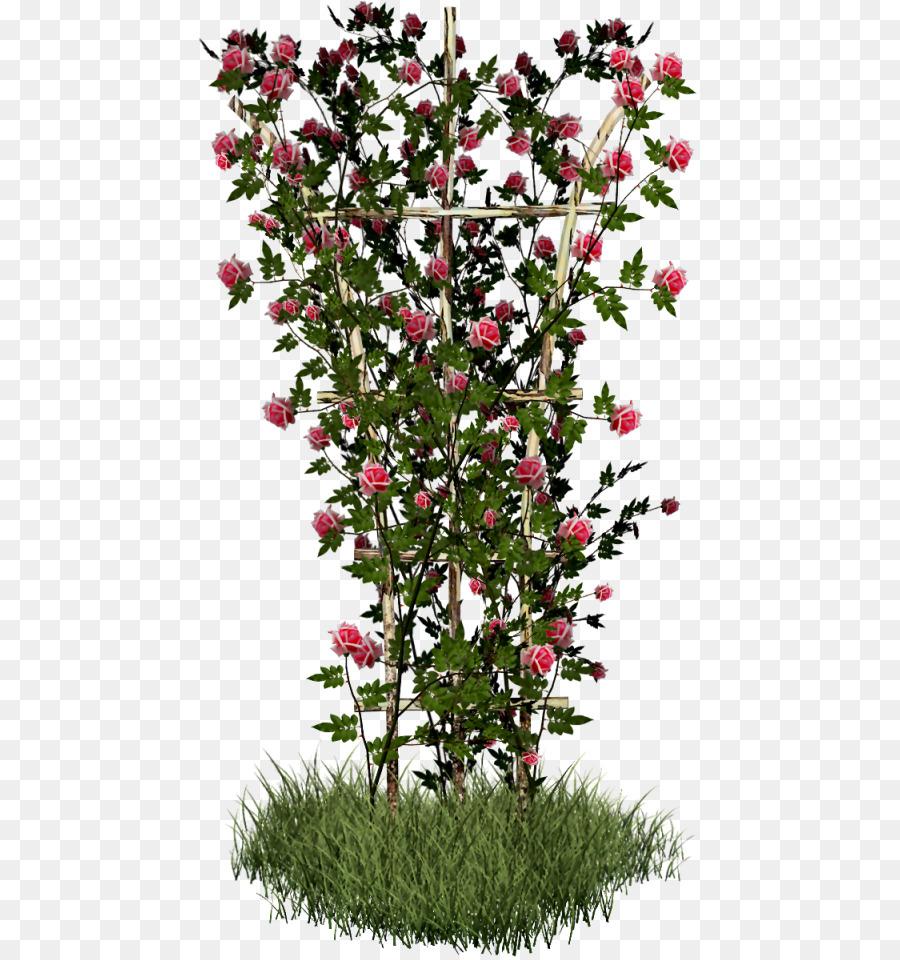 Descarga gratuita de Rosa, Arbusto, Planta Imágen de Png