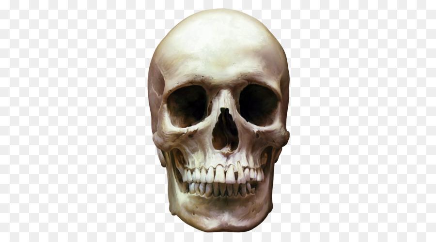 Descarga gratuita de Esqueleto, Cráneo Humano, Imagen Digital Imágen de Png