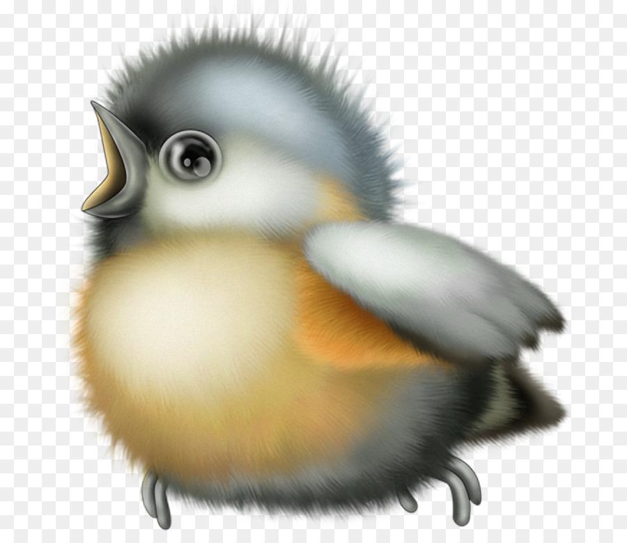 Descarga gratuita de Pato, Aves, Conteo De Aves De Navidad Imágen de Png