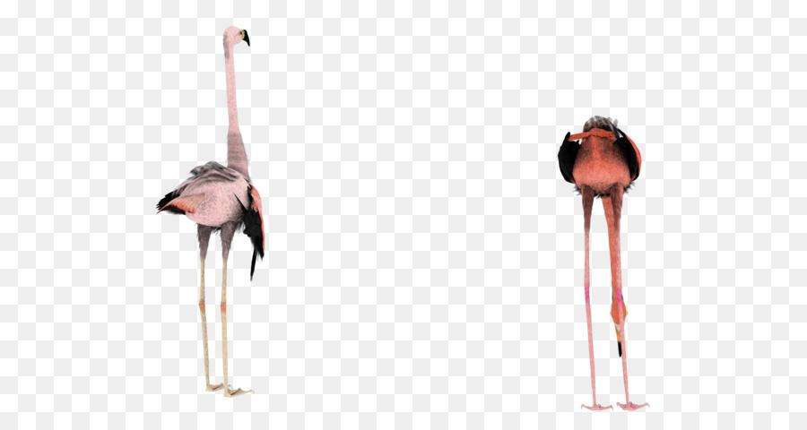 Descarga gratuita de Aves, Flamingo, Fondo De Escritorio Imágen de Png