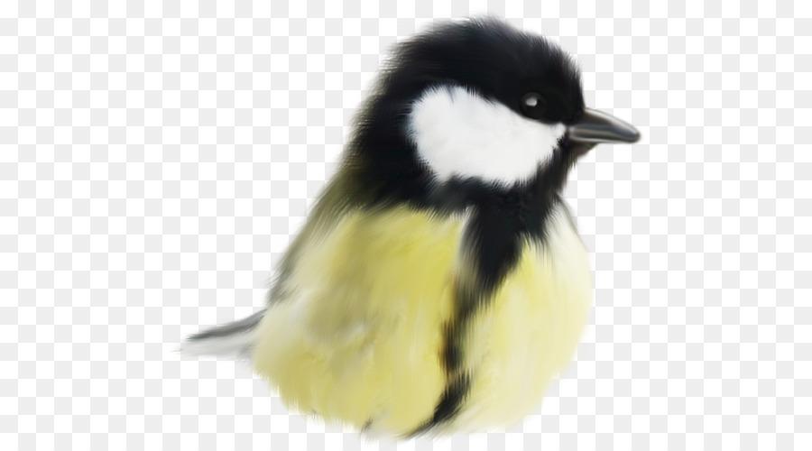 Descarga gratuita de Aves, Lindo Aves, Animal Imágen de Png