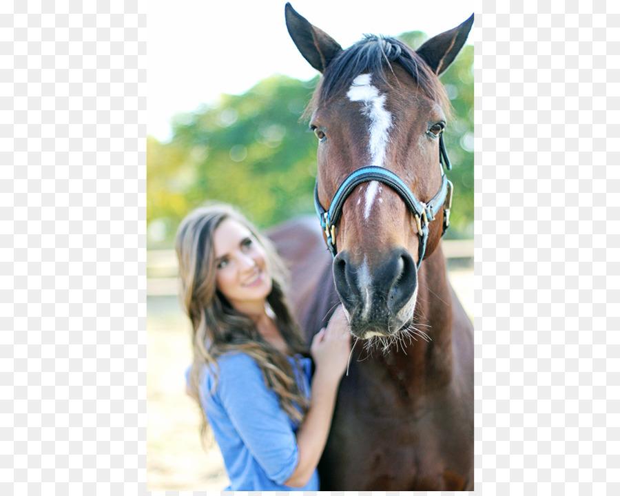 Descarga gratuita de Melena, Mustang, Semental imágenes PNG