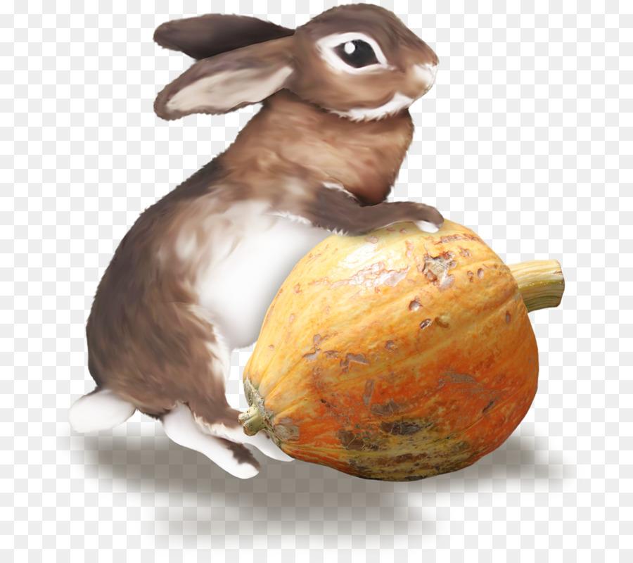 Descarga gratuita de Nacionales De Conejo, Conejo Europeo, La Liebre imágenes PNG