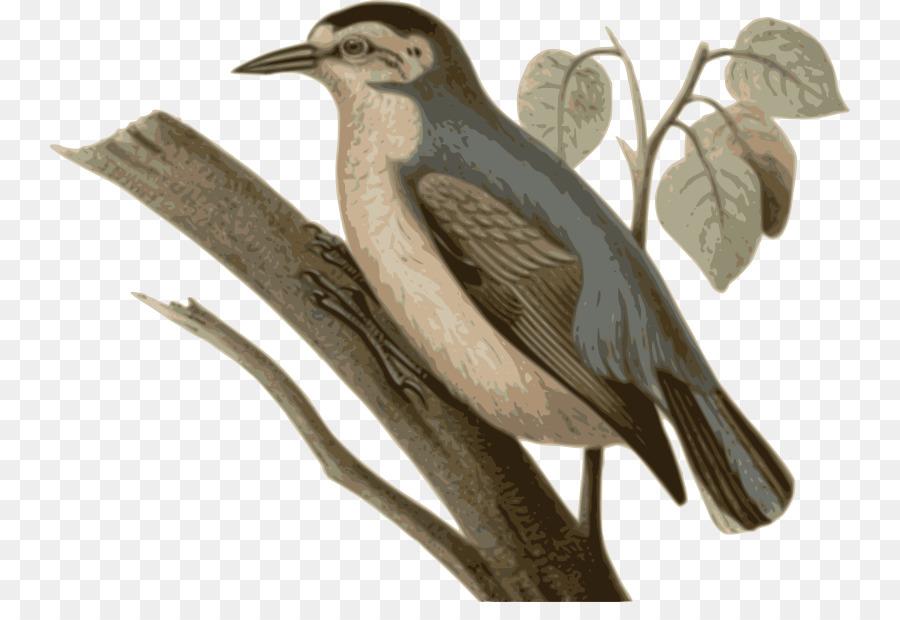 Descarga gratuita de Aves, Trepador Azul, Chino Trepador Imágen de Png