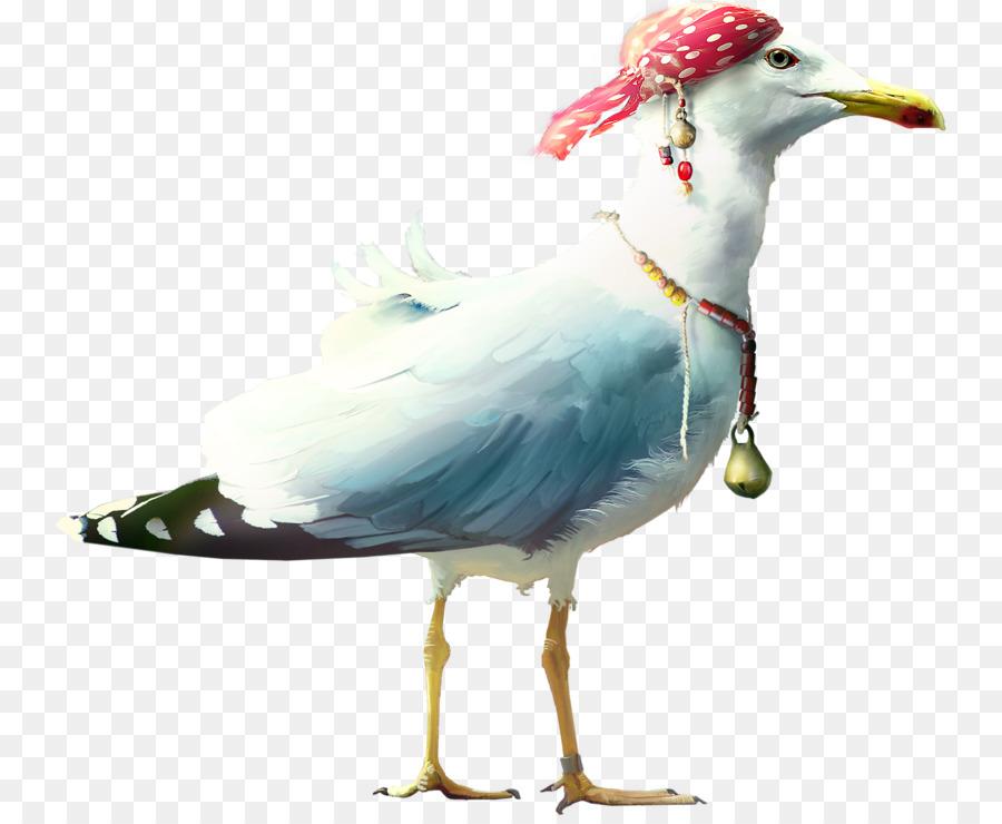 Descarga gratuita de Europea De La Gaviota, Aves, Mar Imágen de Png