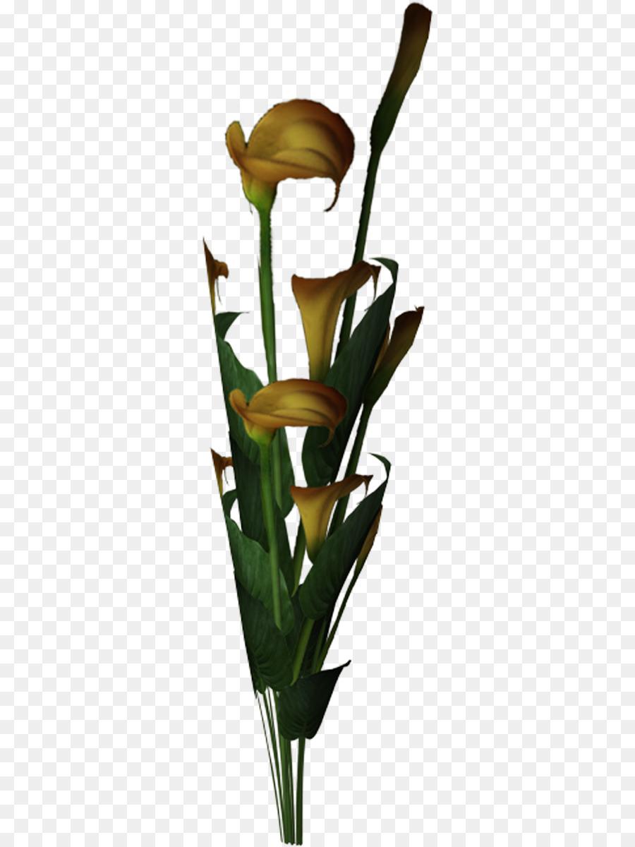 Descarga gratuita de La Luz, Diseño Floral, Color Imágen de Png