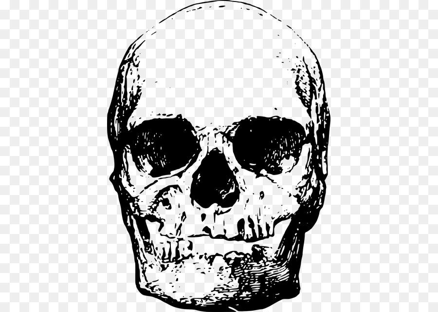 Descarga gratuita de Esqueleto Humano, Esqueleto, La Cabeza Imágen de Png