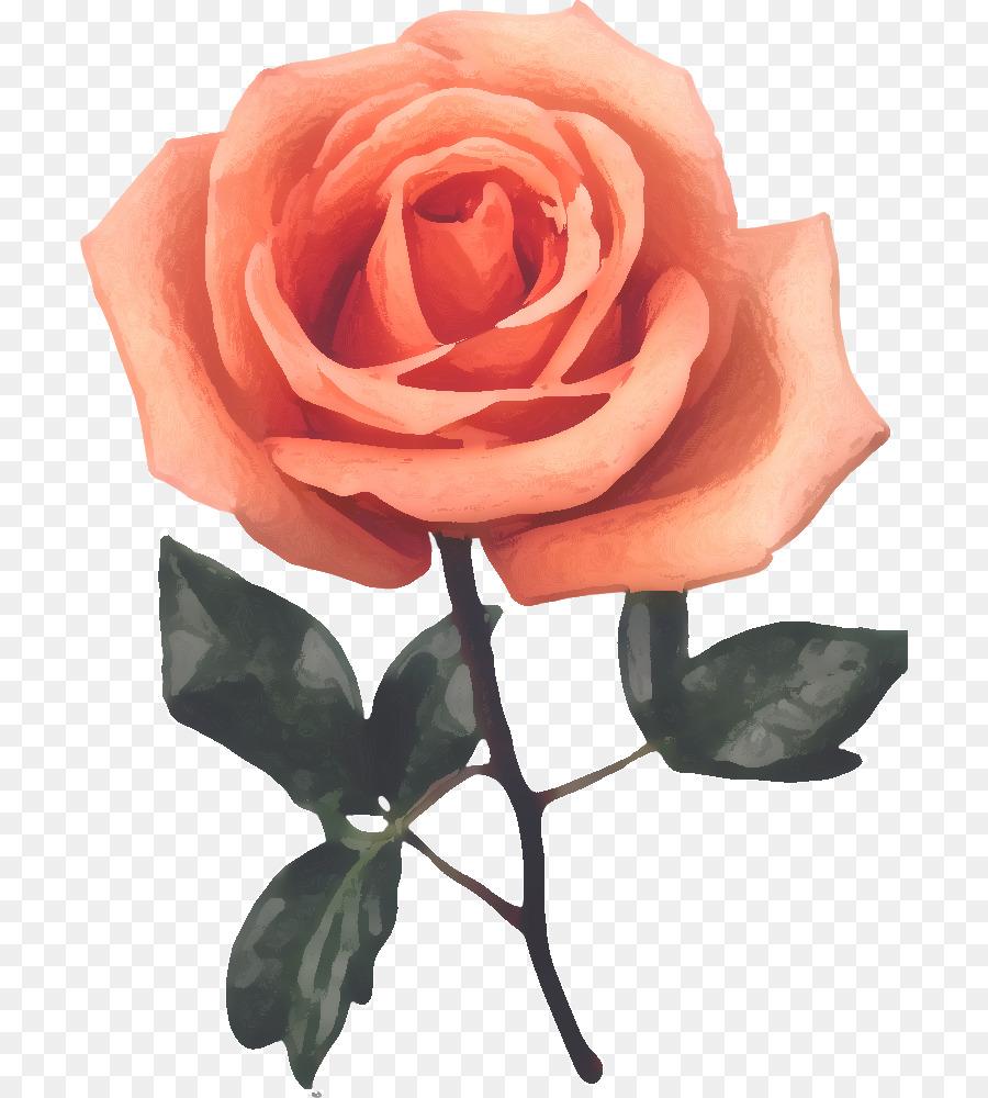 Descarga gratuita de Las Rosas De Jardín, Col Rosa, Flor Imágen de Png