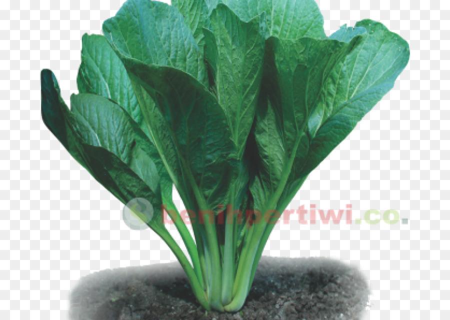 Descarga gratuita de La Acelga, Choy Sum, De Verduras De Primavera imágenes PNG