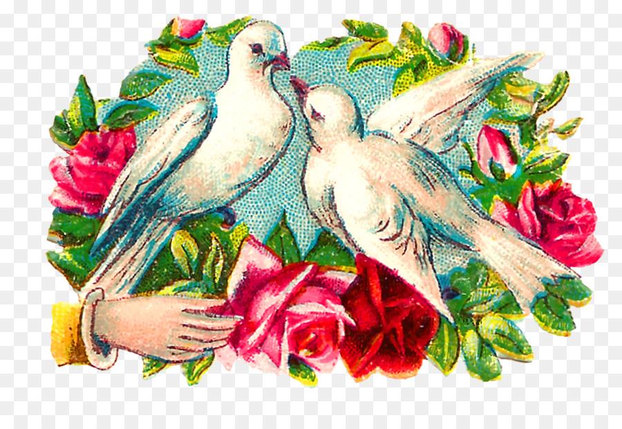 Descarga gratuita de Guacamayo, Aves, Columbidae Imágen de Png