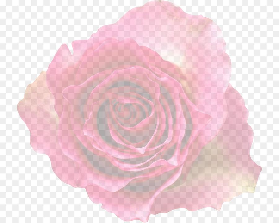 Descarga gratuita de Las Rosas De Jardín, Col Rosa, Rosa Imágen de Png