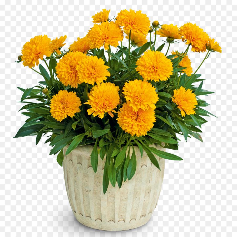 Descarga gratuita de Largeflowered Tickseed, Flor, Planta Perenne Imágen de Png