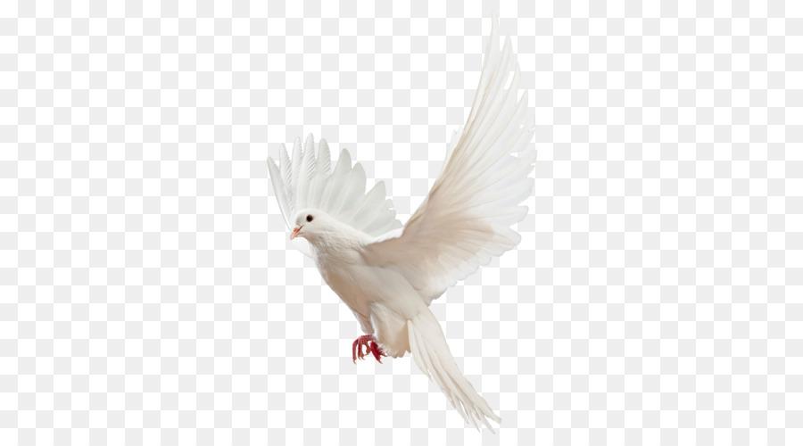 Descarga gratuita de Paloma Mensajera, Columbidae, Aves Imágen de Png