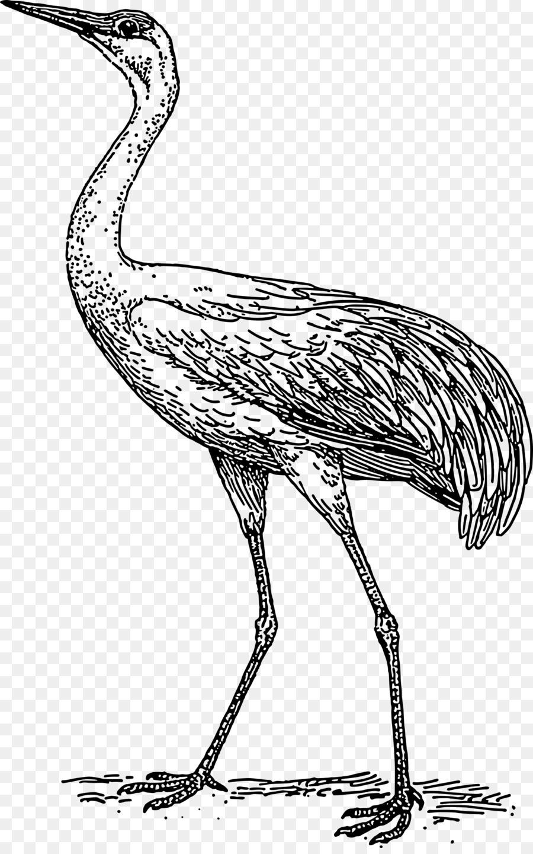 Descarga gratuita de Grúa, Heron, Aves Imágen de Png