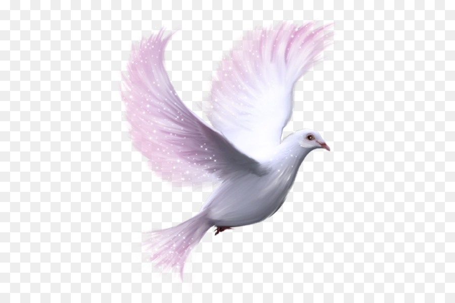 Descarga gratuita de Columbidae, Paloma Mensajera, Aves Imágen de Png