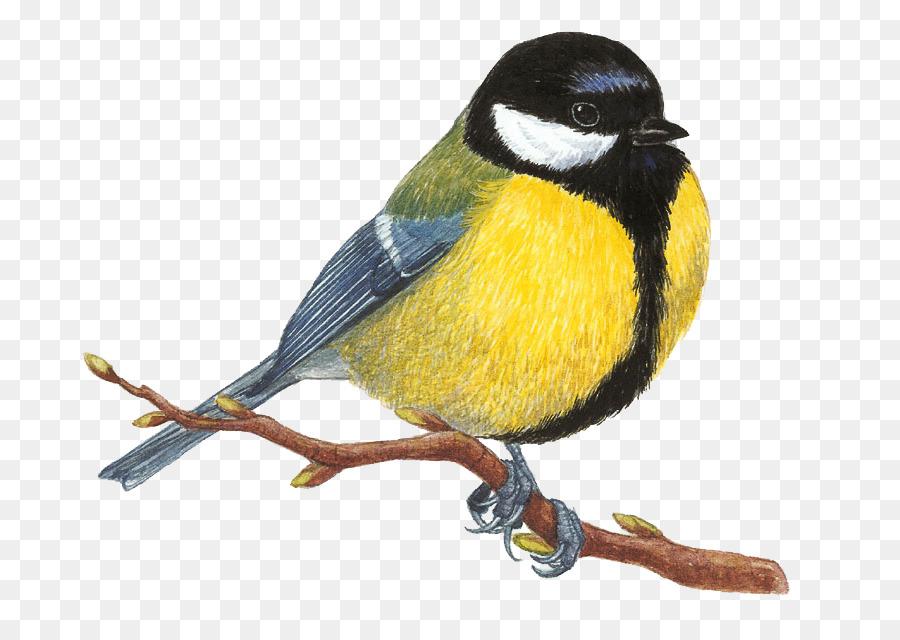 Descarga gratuita de Aves, Dibujo, Gran Garser imágenes PNG