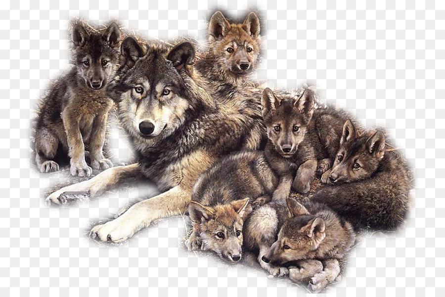 Descarga gratuita de Perro, Cachorro, Coyote imágenes PNG