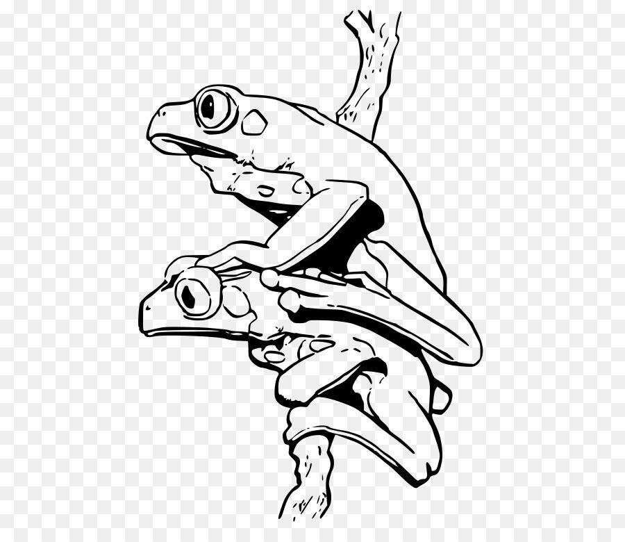 Rana Libro Para Colorear Blue Poison Dart Frog Imagen Png