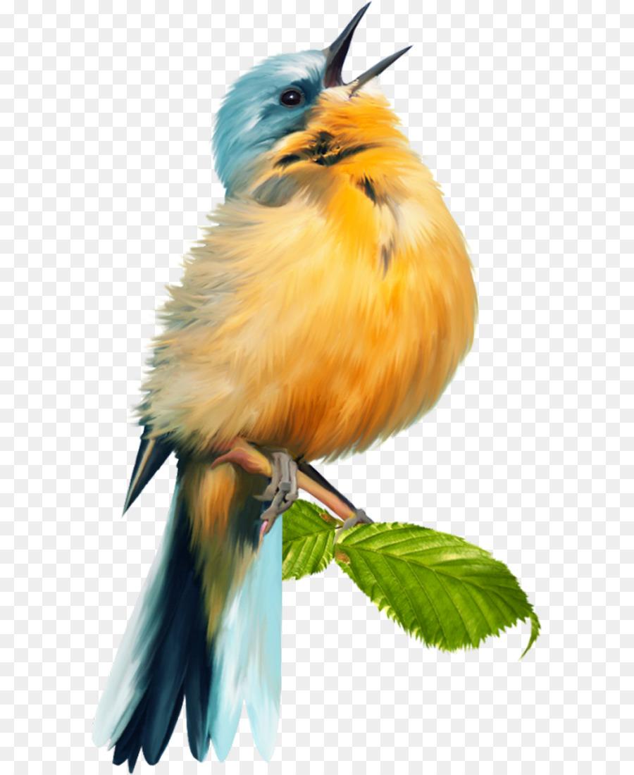 Descarga gratuita de Aves, Scrapbooking, Imagen Digital Imágen de Png