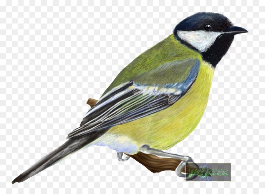 Descarga gratuita de Los Pinzones, Aves, Eurasia Blue Tit imágenes PNG