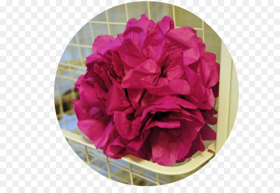 Descarga gratuita de Col Rosa, Las Rosas De Jardín, Clavel Imágen de Png